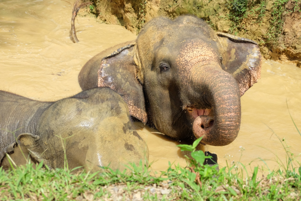 Elephant Hills – Superior Luxury Glamping in the Jungle