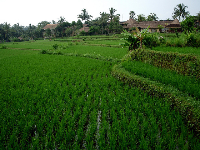 10 Things to See and Do in Ubud, Bali