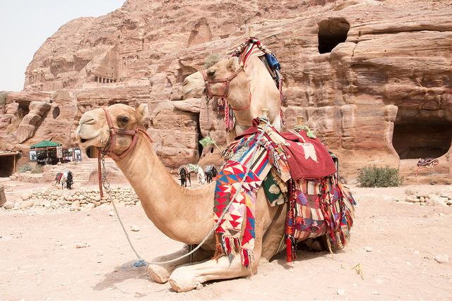 Exotic Places, Camels, Petra, Jordan