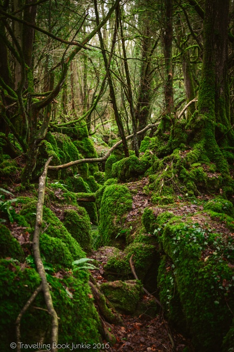 puzzlewood, hollywood, film, movie, locations, filming, enchanted, forest, star wars, blockbuster, england, british, secret,