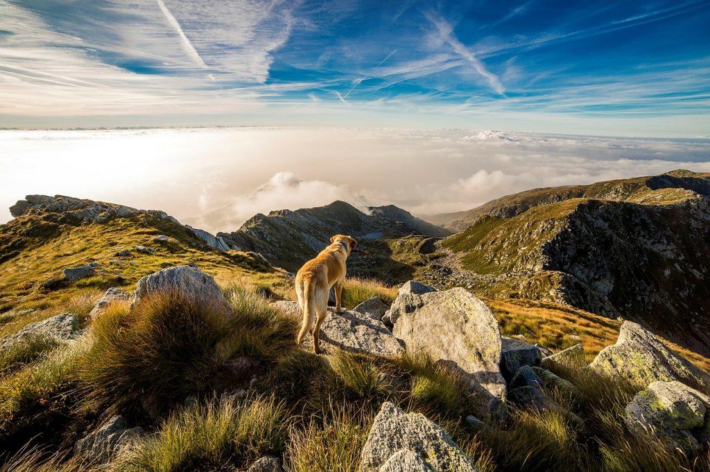 Mountain Hiking, Adventure travel, outdoor activities