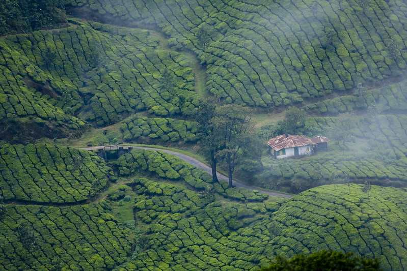 Munnar is one of the places visited in India on a Life of Pi tour of the country.